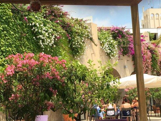 Club Med Opio Provence : Pool