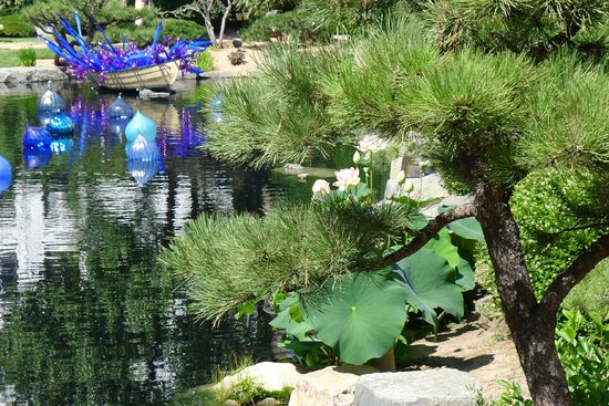 Denver Botanic Gardens: a view of the water lily in bloom and a floating display