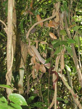 Palm Beach Resort & Spa: albero sacro