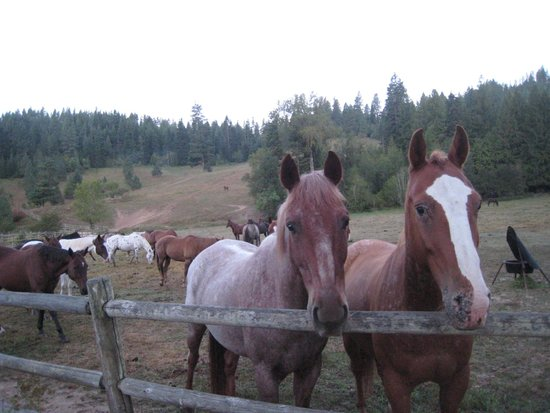 Red Horse Mountain Dude Ranch : Time for some morning treats from the apple tree on the grounds