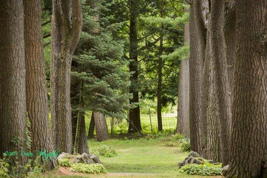 Yaddo Gardens - Treelined path