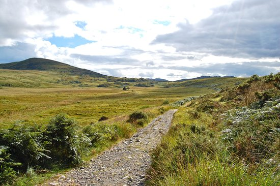 Parc national de Killarney : le parc de killarney