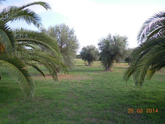 VOI Arenella resort: Giardini