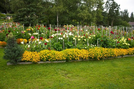 Moose Gardens Bed and Breakfast: The beautiful gardens