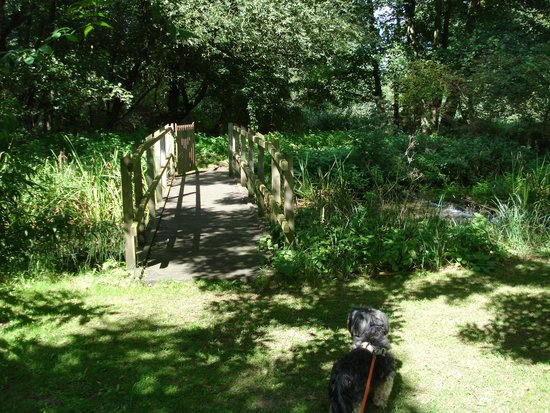 Gooderstone Water Gardens & Nature Trails : Dogs on leads welcome!