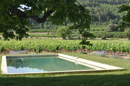 Le Mas Perreal : Looking across the pool to the Mas' vineyards.