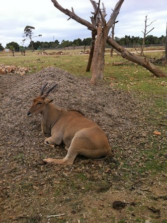 Safari Zoo: Tiere
