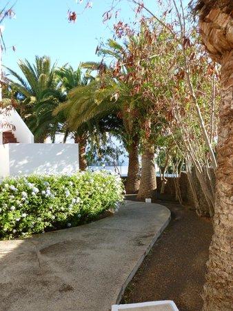 Ole Olivina Lanzarote: jardins