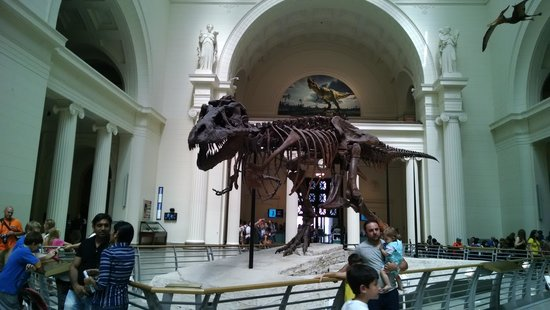 The Field Museum: Sue!!!