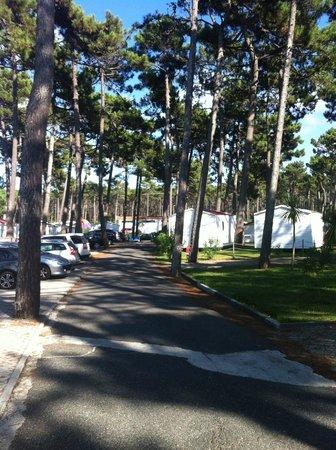 Parque de Campismo Orbitur S.Pedro de Moel: camping