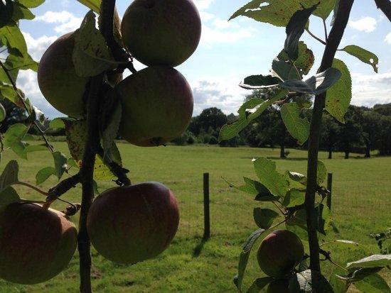 Yellingham Farm: Orchard