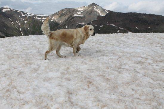 Carosello 3000 - Ski Area Livigno: la mia cucciolona a 3000 metri sulla neve in agosto