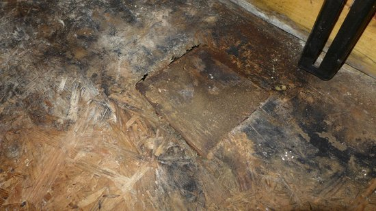 Kintyre Cottages: Mould under carpet in bedroom