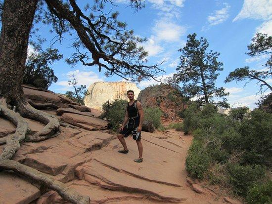 Angel's Landing: Tree Roots on the rocks