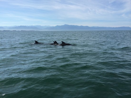 Wildlife Connection: Circling dolphins