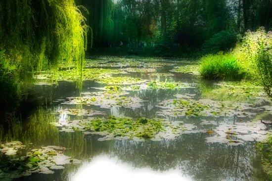 Maison et jardins de Claude Monet : Monet's Lily pond