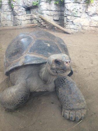 Newport Aquarium: I loved this turtle!