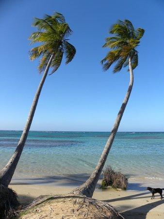 Grand Bahia Principe El Portillo: stranden