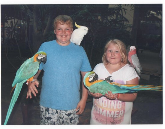 Beatriz Playa & Spa: kids enjoyed the parrot show and had their picture taken