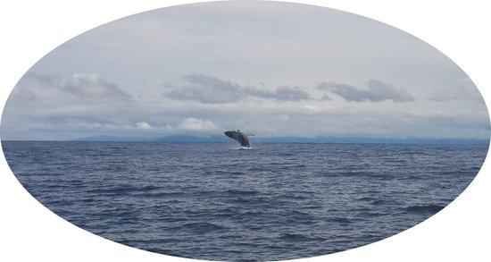 Playa de Oro Lodge : Whale jumping