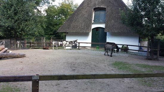 Bürgerpark: petting zoo