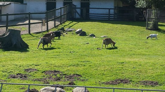 Buergerpark: petting zoo