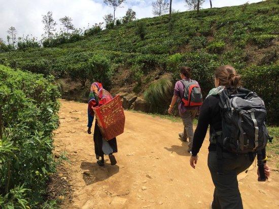 Nuwara Eliya and Tea Country: Recolectoras camino de la entrega