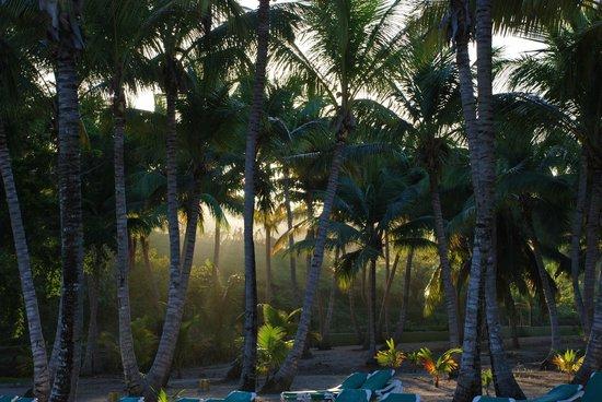ClubHotel Riu Merengue: the beach