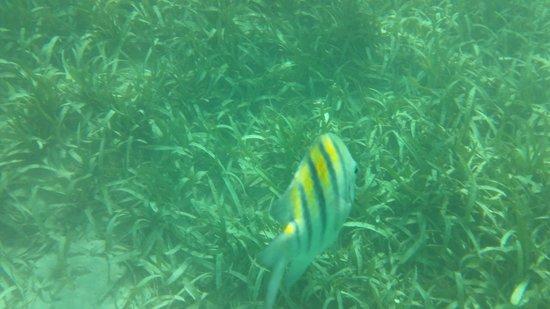 Pineapple Beach Club Antigua: Snorkelling