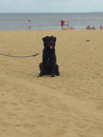 Middletown, NJ: Bear on the beach