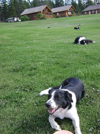 Echo Valley Ranch & Spa: The always entertaining ranch Border Collies