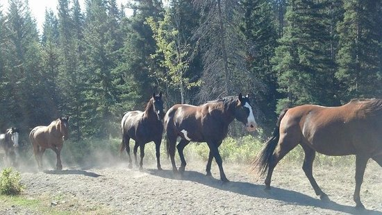 Echo Valley Ranch & Spa: A few of the beautiful Echo Valley Ranch horses