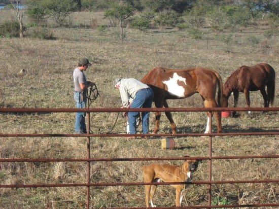 Hacienda de Taos: selecting a horse