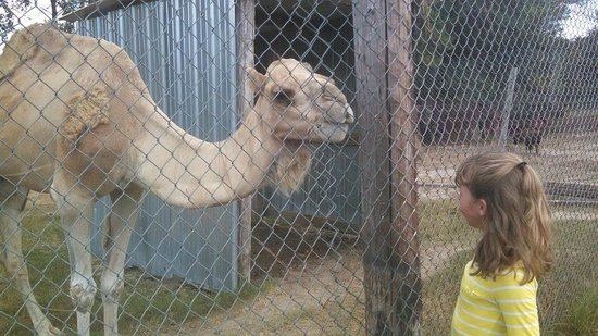 McClelland's Critters Zoo