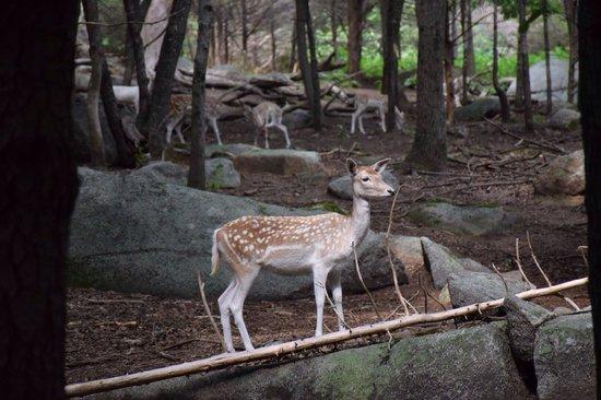 Southwick's Zoo: Deers gone wild....