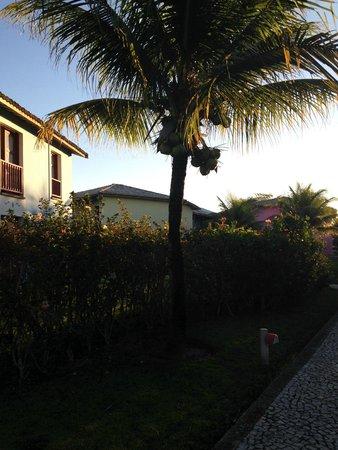 Club Med Trancoso : coqueiro