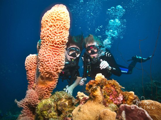 Bas Harts Diving Curacao: Bas Hart Diving on Curacao