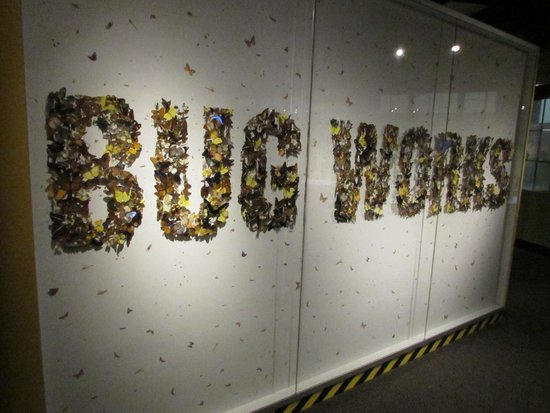 Buffalo Museum of Science: Bug Works Sign, Made of Insects!