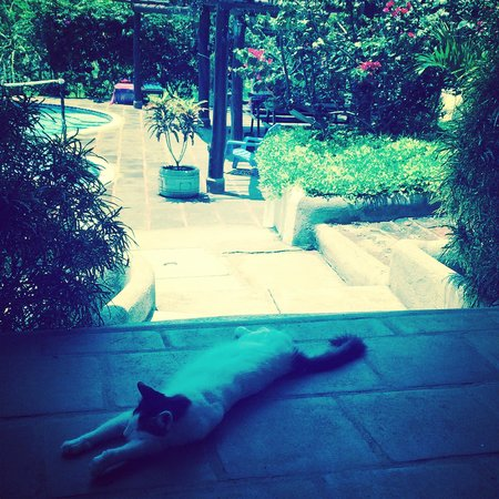Casa Maderas: cat on my patio