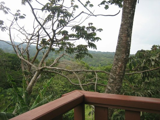 Cala Lodge: cloudforest view