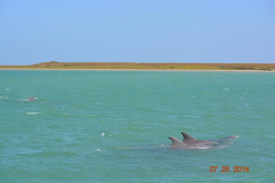 South Padre Island Dolphin Research & Sea Life Nature Center: Dolphins putting on a show!