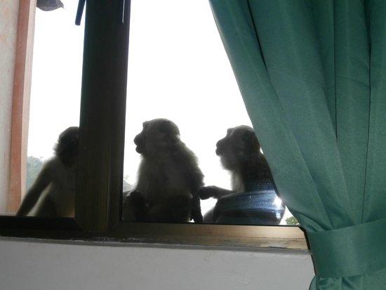 Selesa Tioman Condo Hotel : three onlookers on our balcony