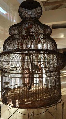 Gran Melia Golf Resort Puerto Rico : Parrot