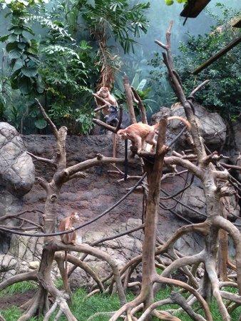 Bronx Zoo : Monkeys