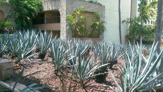 Marriott Puerto Vallarta Resort & Spa : Agave Garden