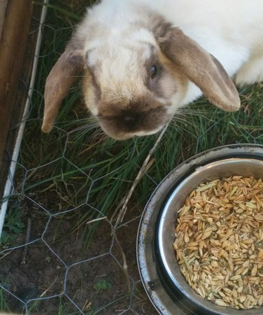 Taras Richmond Farmstay: Cute bunny