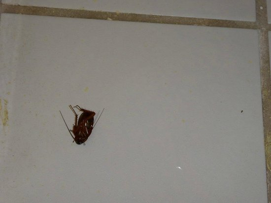 Econo Lodge : nearly dead cockroach - did they use pesticides?