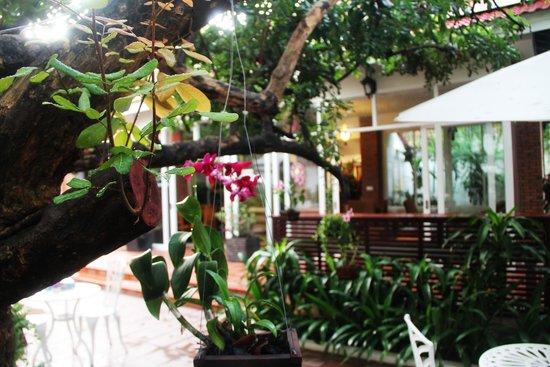 Skyline Boutique Hotel: Garden