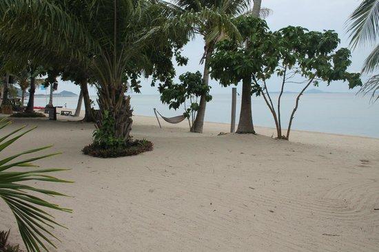 Phangan Beach Resort: Great view...