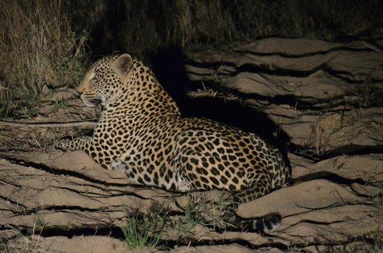 Cheetah Plains: Leopard